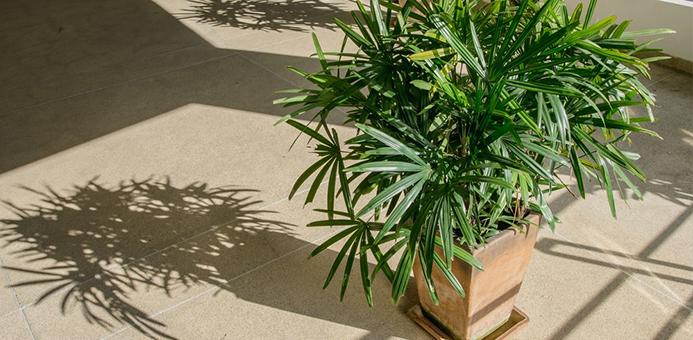 palmera bambu humedad casa