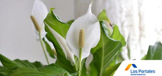 plantas absorben humedad hogar